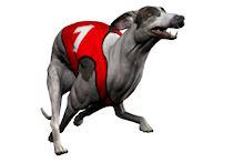 Game Screenshot - Dogracer